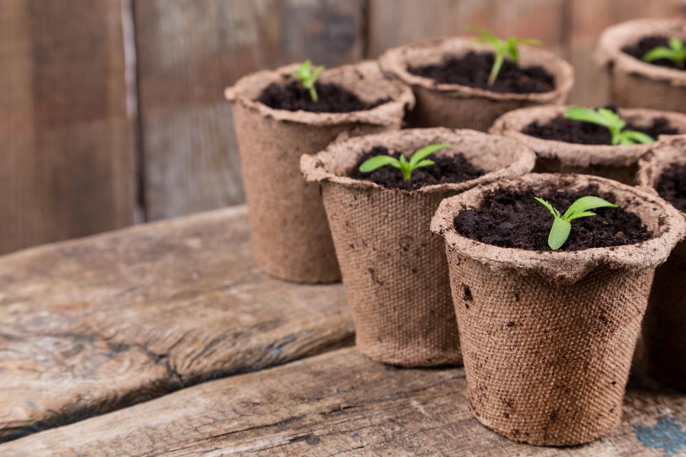 種まきポットを新聞紙で手作りしよう!超エコなガーデニングのヒント