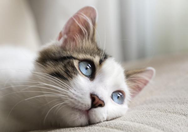 「猫」DISH//の歌詞の意味と曲の特徴について